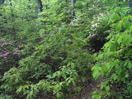 trail?!